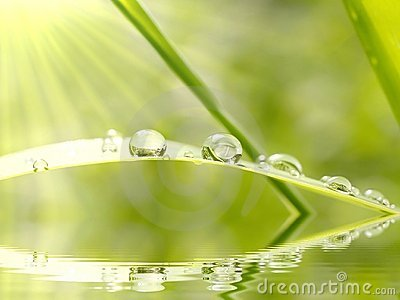 Rain drops on the grass at sunrise