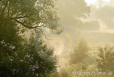 Early morning scenery with trees in the fog