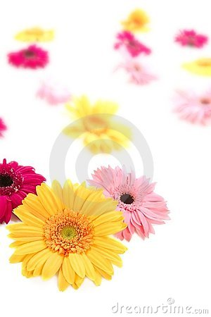 Gerbera  colorful blur flowers background