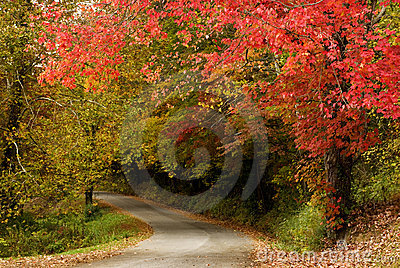 Beautiful Fall Trees with Curving Road