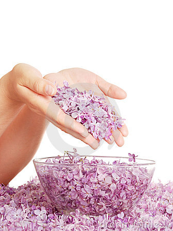 Lilac in hands above a bowl with water