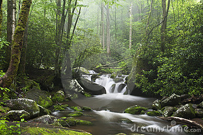 Relaxing scenic in the Great Smoky Mountains USA