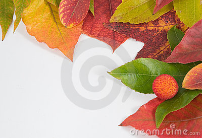 Autumn leaf composition