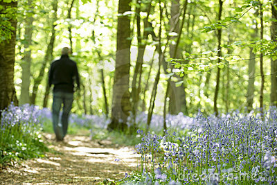 Man walking through forest of bluebells