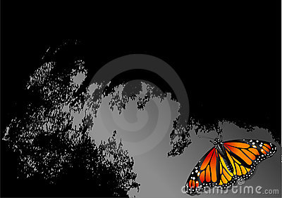 Butterfly Abstract Graphic