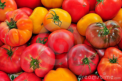 Red and Yellow Heirloom Tomatoes
