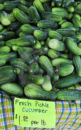 Fresh Pickle Cucumbers