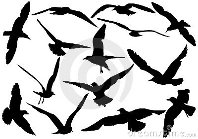 Flying sea-gulls illustration
