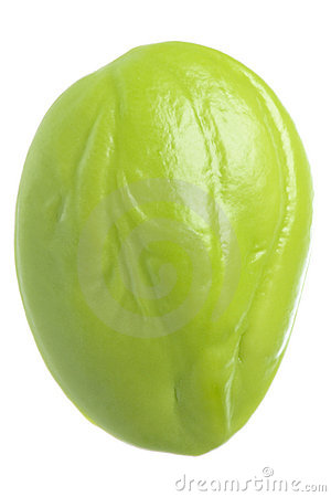 Bitter Bean Isolated