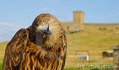 Eagle in front of castle