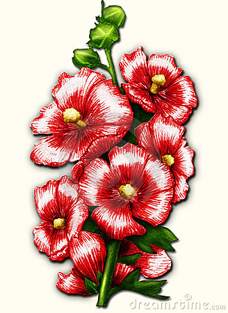 Red mallow on white
