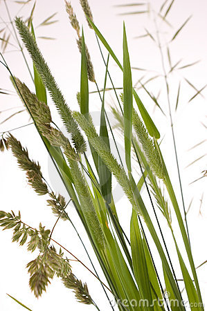 Close up to grass