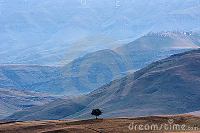 Lonely tree at foot of Drakensberg range
