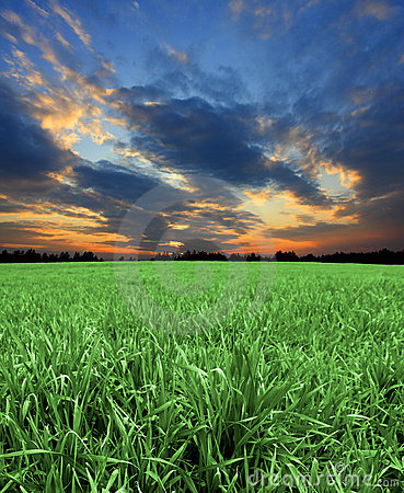 Green fields with sunset sky