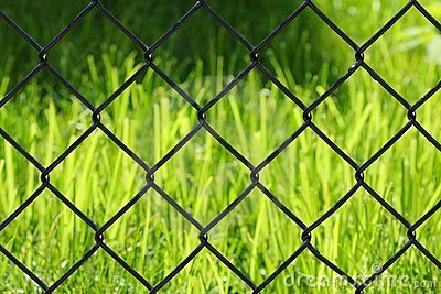Grass behind a fence