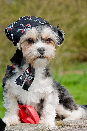 Little dog with bandana on her head