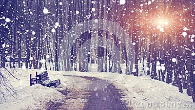 Snowfall in silent winter park at bright sunset. Snowflakes falling on snowy alley. Christmas and New Year theme. Xmas background.