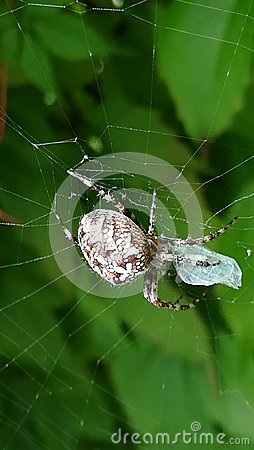Spider preys on an insect