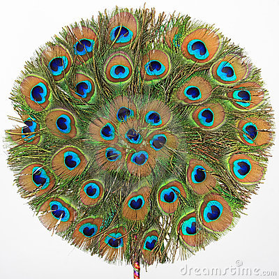 The peacock fan