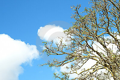 Tree against a sky in spring