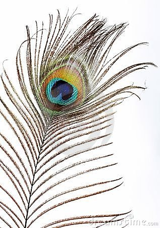 The peacock eye