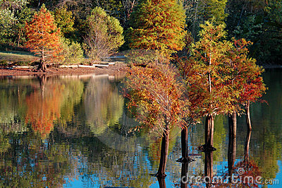Fall Cypress Trees Water Reflection