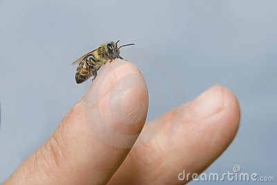 Bee on a finger