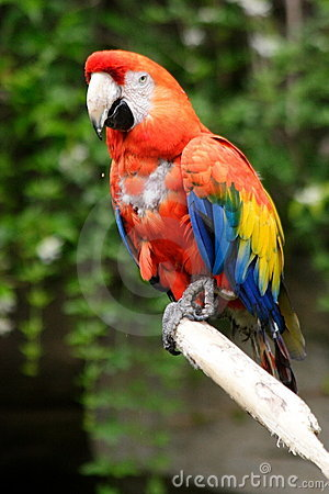 Nice coloured parrot