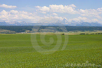 Teton Mountain with Green Pasture and Field