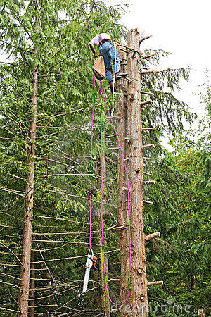 Man climbing down from topped tree