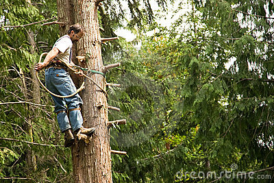 Tree climber and logger
