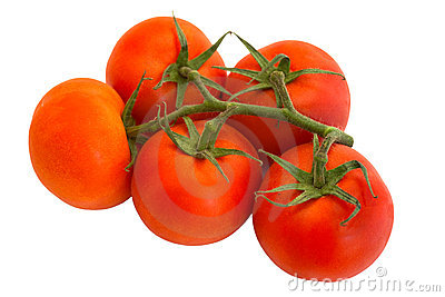Five tomatoes isolated