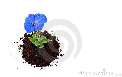 Blue sprout of flower