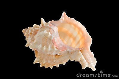 Sea shell isolated clipping path