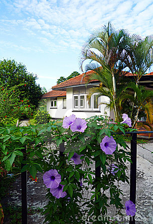 Tropical house and flowering garden