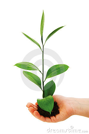 Green seedling in hand isolated