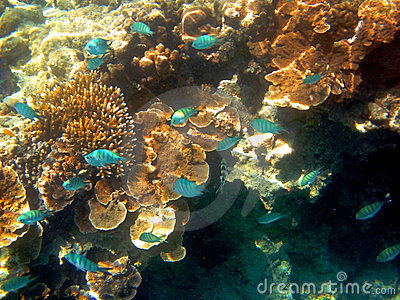 Fish and Coral, Great Barrier Reef, Australia