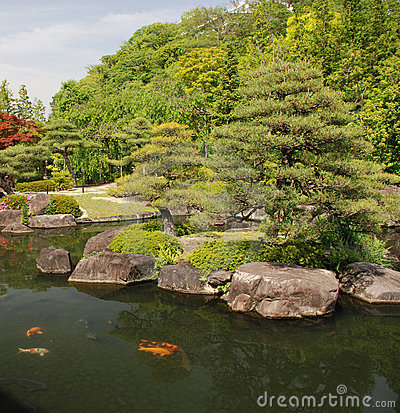 Japanese Koi Carp Pond