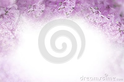 Purple flower Bougainvillea frame on soft pink background valentine and wedding card concept