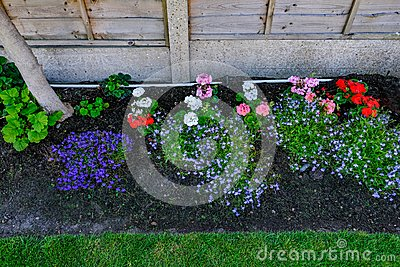 Flower bed closeup with bedding plants in early summer