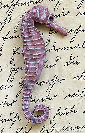 Sea horse on letter