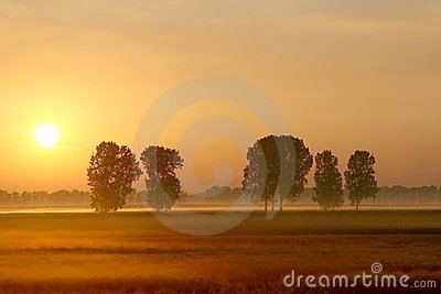 Misty summer sunrise with trees on a field