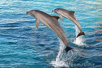 Dolphin two