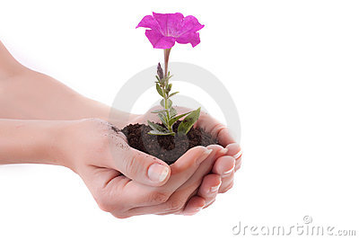 Young flower in hands