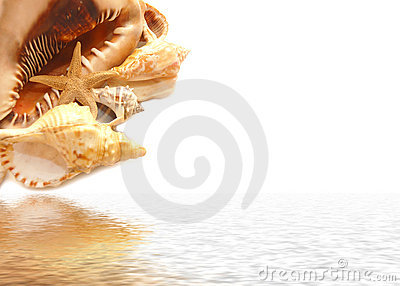 Seashell on white and their reflexion in water