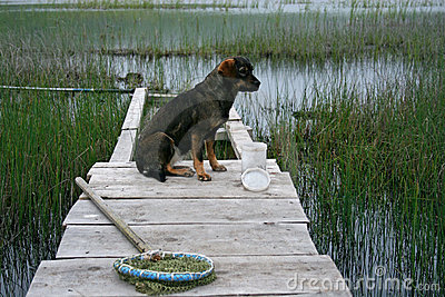 Fishing and a dog