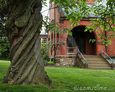 Twisted Tree and Town Library