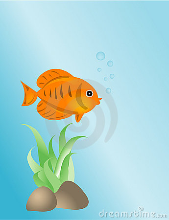 Gold fish - illustration