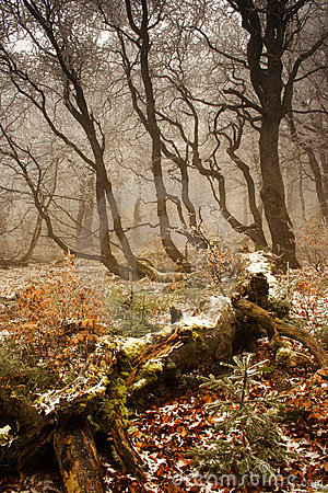 Winter begins in forest