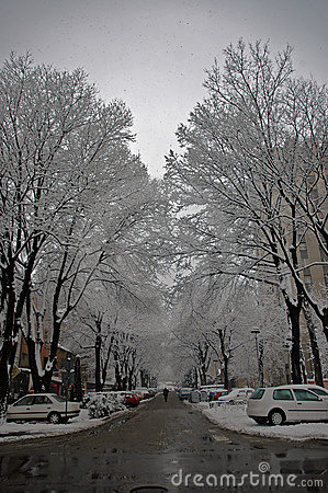 Street in winter